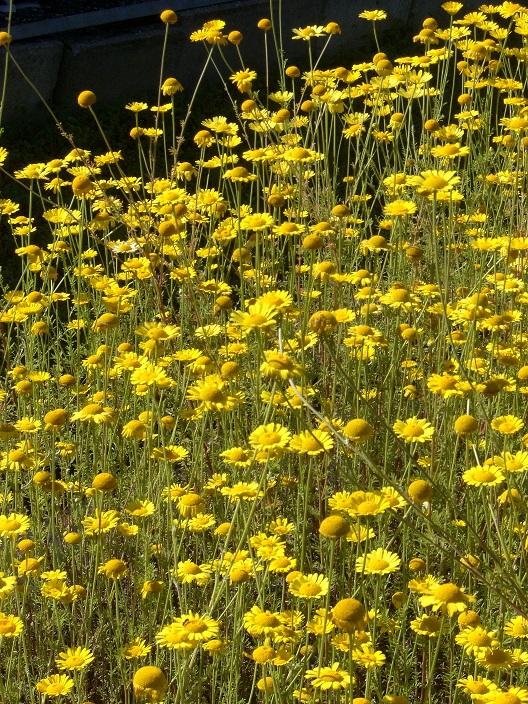 Optigrün-Vegetationspaket Blumenwiese